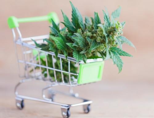 Oljefondet: Ta en skål for oljefondets cannabis-fortjeneste