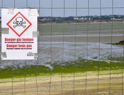 Seks strender i Nord-Frankrike stengt etter oppblomsting av alger som skiller ut giftig gass.